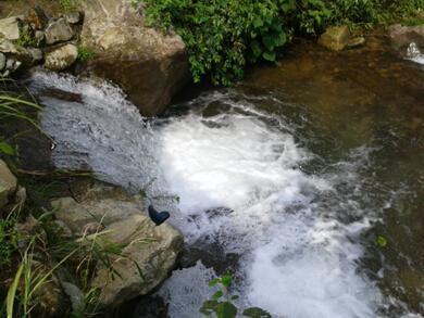 湖北皇赐天然泉水获中国富硒水行业最具影响力品牌