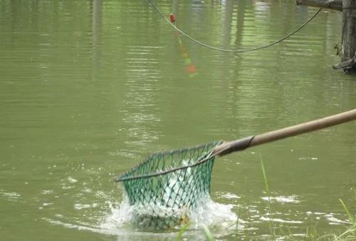 两男子嘴馋去私人鱼塘电鱼  七条鱼换来行政拘留