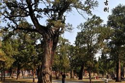 """掛牌保護   通山兩千余棵古樹有了""""護身符"""""""
