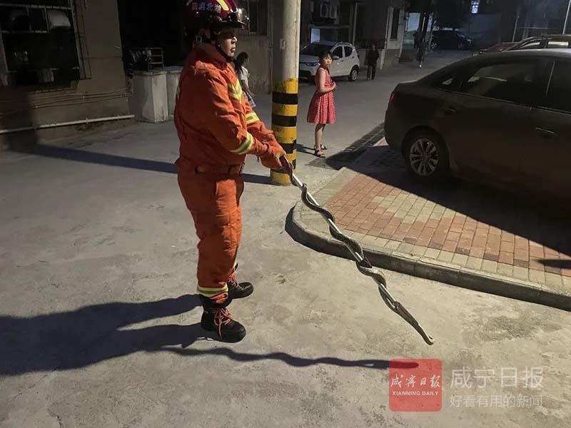 """捕获""""扰民""""大蛇35条 夏季蛇类出没频繁要小心"""