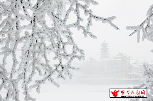 雪后,镜头下的九宫山,落光了叶子的柳树上,挂满了毛茸茸,亮晶晶的银条