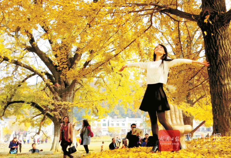 秋色·秋景·秋收……天府崇阳好光景