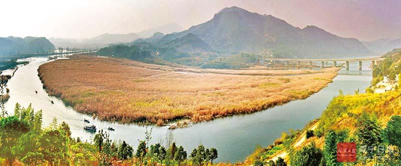 组图:洪港芦苇荡