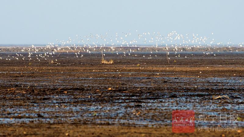 向阳湿地鸟蹁跹