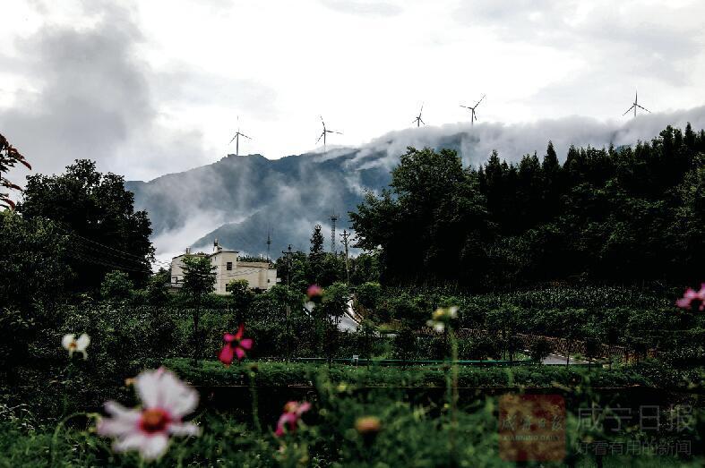 组图:雨 雾 黄 袍 山