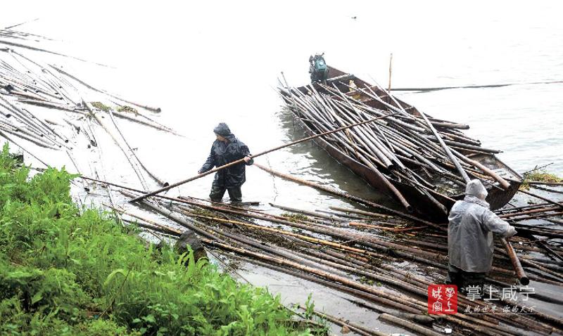 图文:清理撑网竹竿