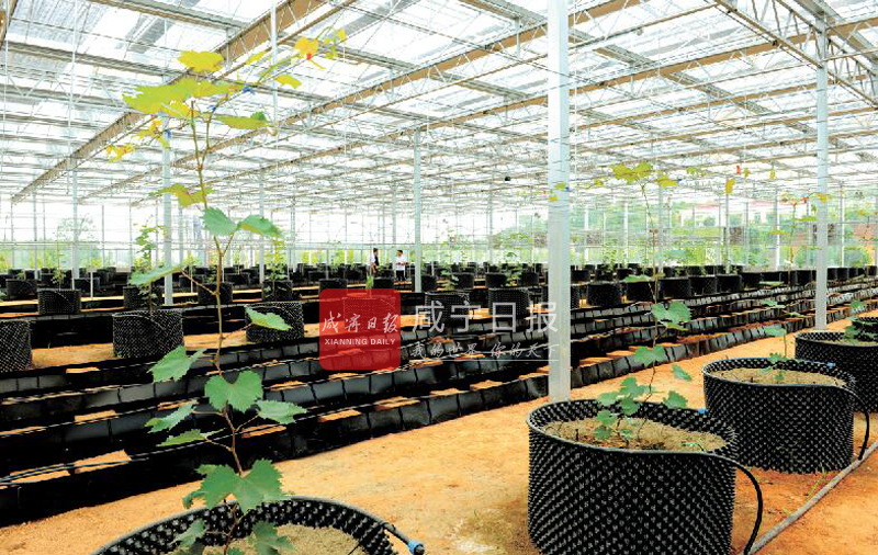 图文:科技农业好风光