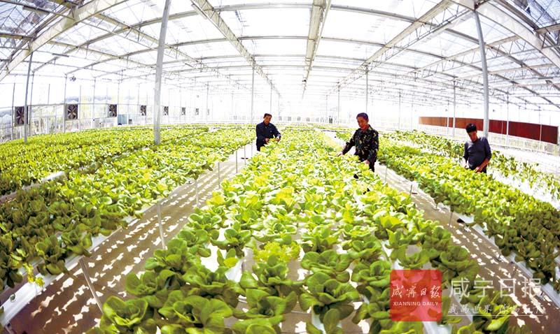 图文:发展观光农业
