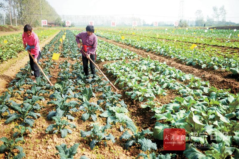 图文:试种优质蔬菜