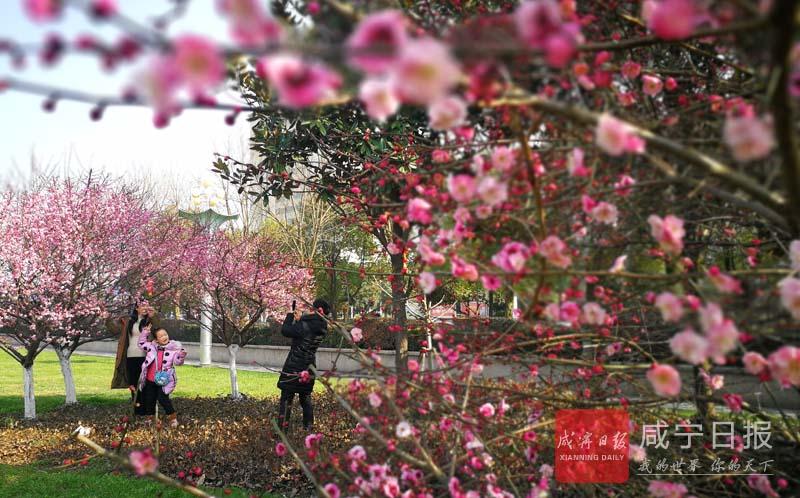 图文:全市春节旅游市场红红火火