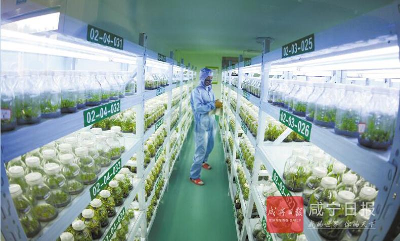 图文:发展药材 助农脱贫