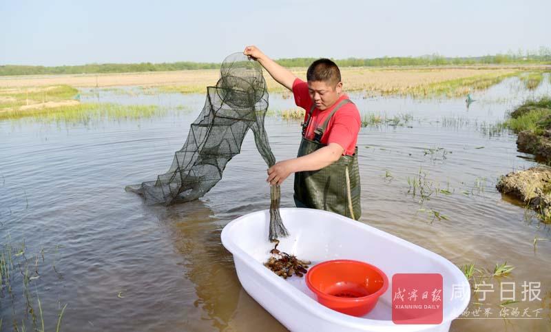 图文:车埠小龙虾跳上致富路