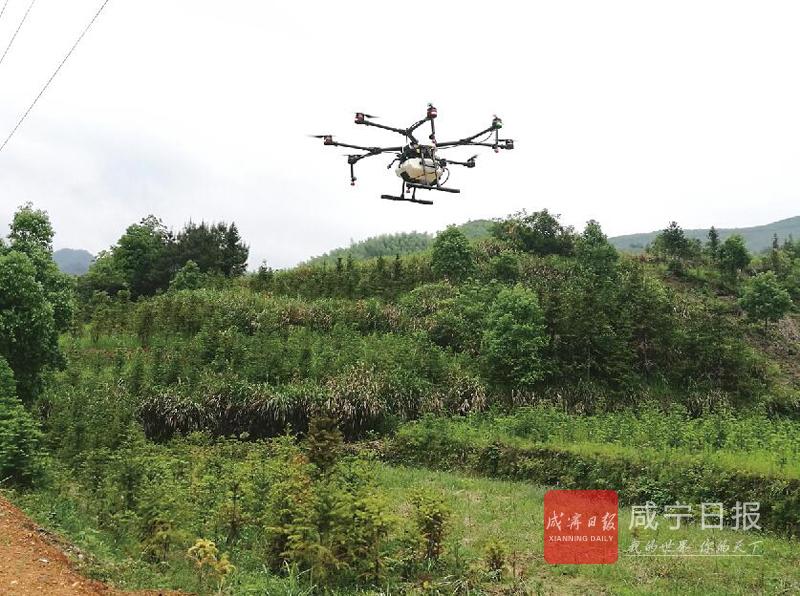 图文:无人机喷雾除草