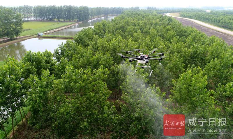 图文:防治林虫害