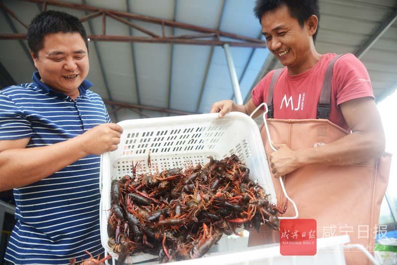 图文:小龙虾喜丰收