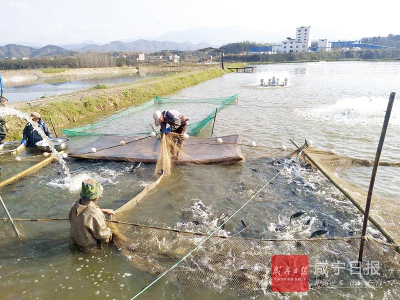 图文:生态养殖助脱贫