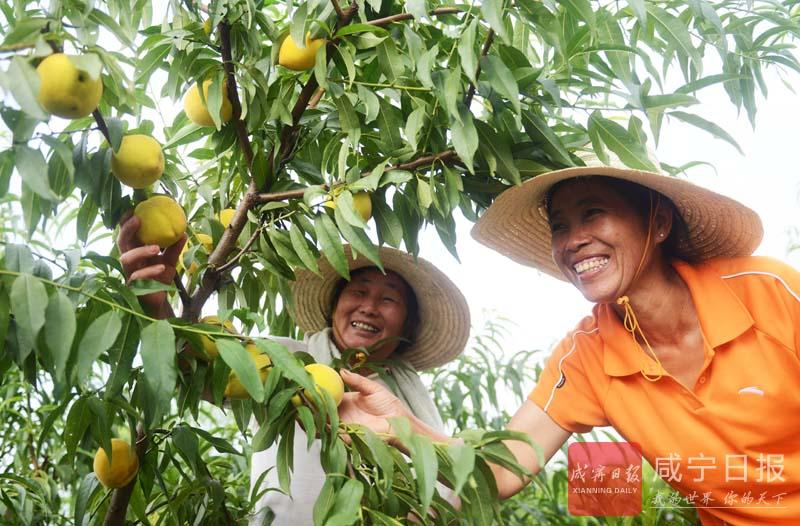 图文:特色水果助农致富