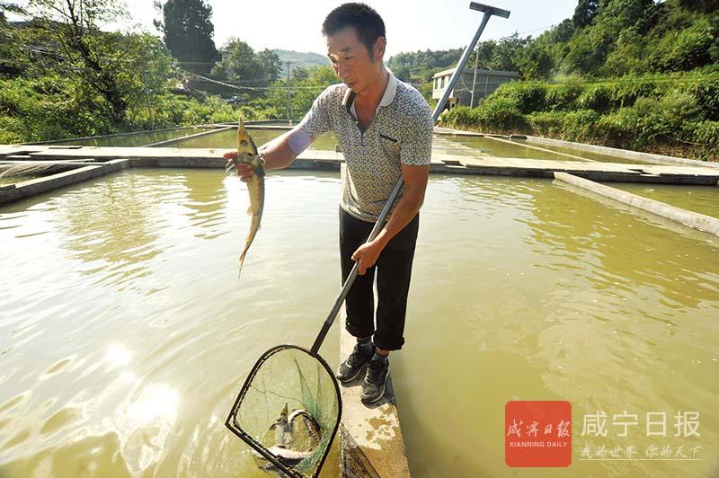 图文:山泉养鱼