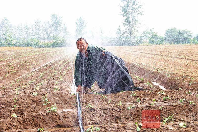 图文:喷灌抗旱