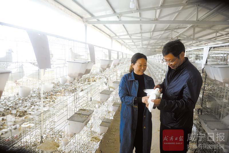 图文:生态养鸽助脱贫