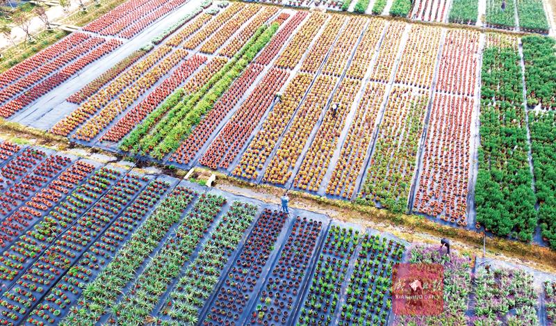 图文:多彩园艺