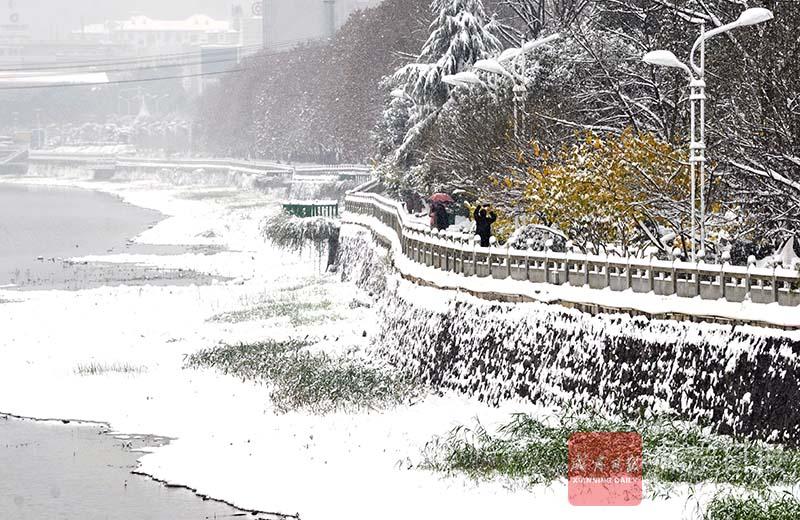 图文:飞雪迎新年