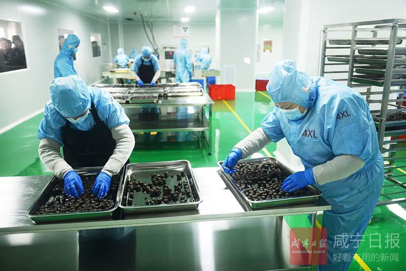 图文:长松食品投产