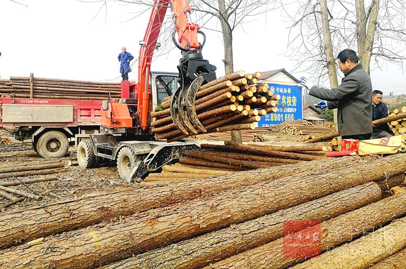 图文:竹木交易助脱贫