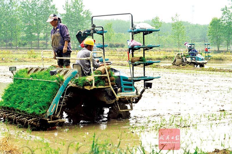 圖文:機械栽培提升效益