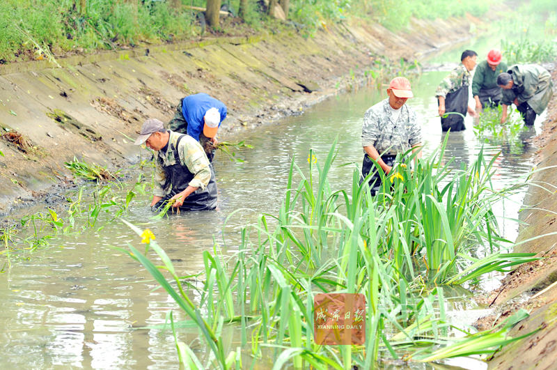 圖文:栽植水生植物 改善人居環境