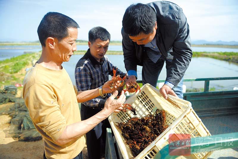 图文:水产养殖增收致富