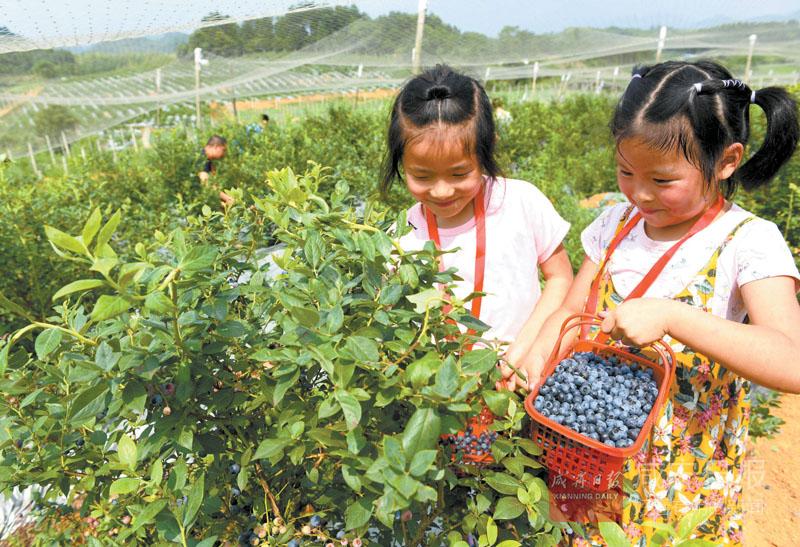 图文:旅游采摘助农增收