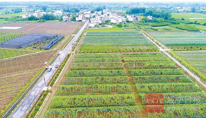 圖文:創建綠色農業示范區