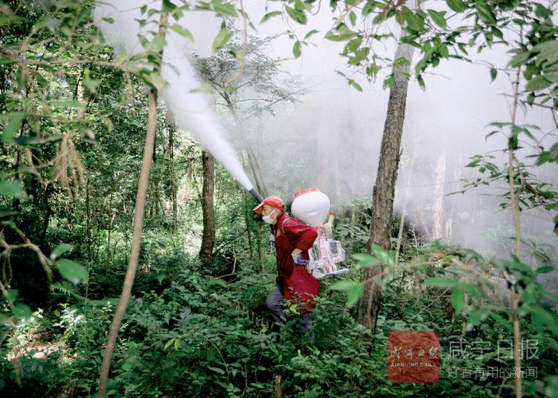 圖文:防治松林病蟲害
