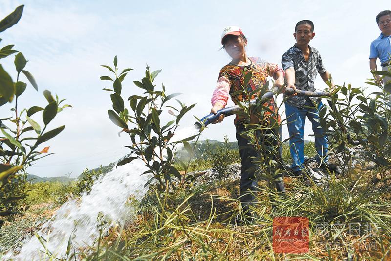 图文:抽水灌溉