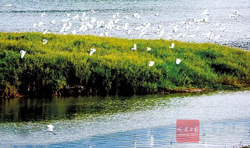 图文:富水湖国家湿地公园青山绿水白鹭飞