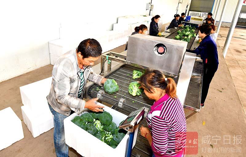圖文:蔬菜俏銷