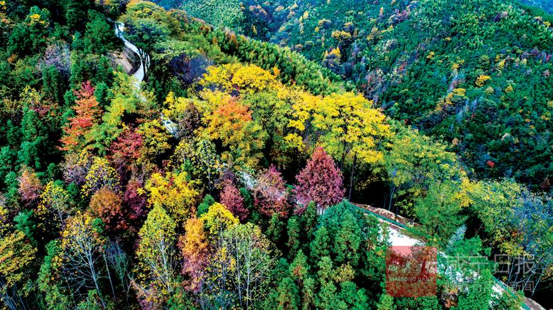 圖文:五彩長林山