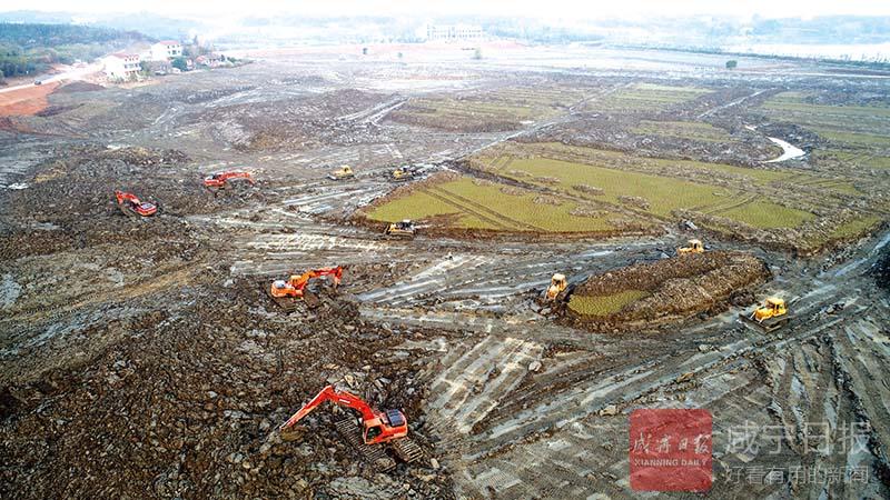 图文:咸安投资2500余万元打造水生植物园