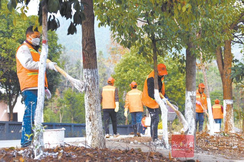 图文:冬季树木养护