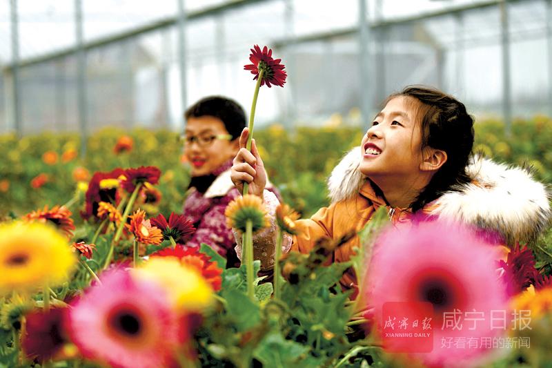 图文:通城赛公村基地鲜花俏