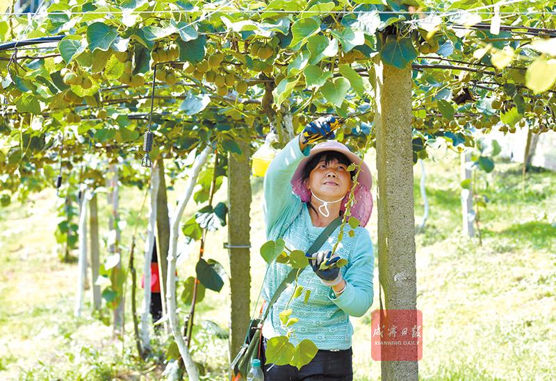圖文:果園管理保障豐產