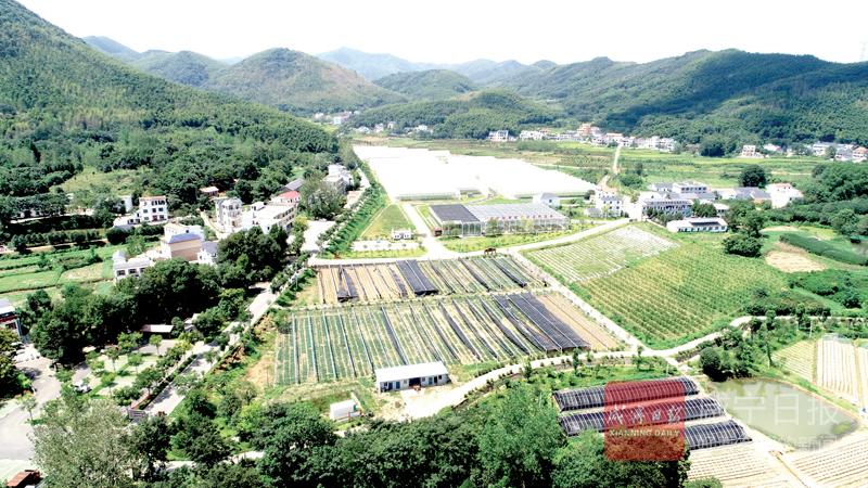 图文:咸安区洪口村农旅结合民富村美