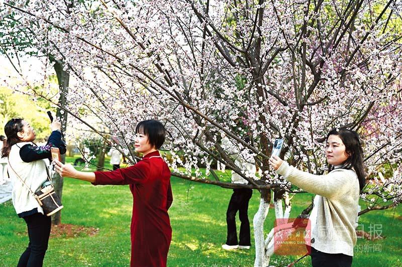 图文:新春赏花