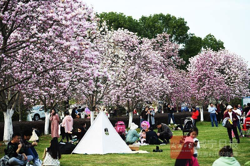 图文:春暖花开季?赏花正当时