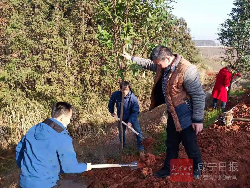 图文:义务植树绿化家园