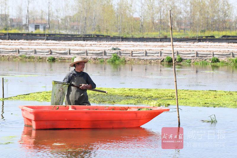 图文:稻虾共作助农增收