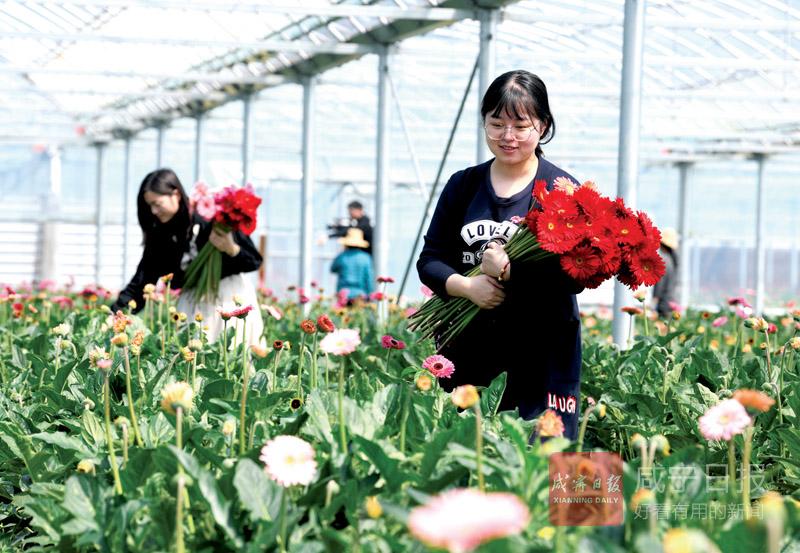 图文:咸安双溪桥镇鲜花经济助力乡村振兴