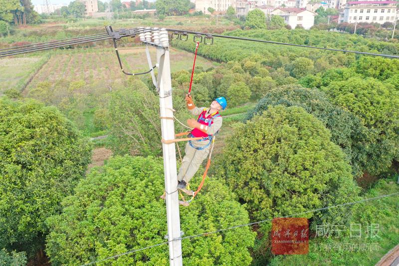 图文:检修线路  保障供电