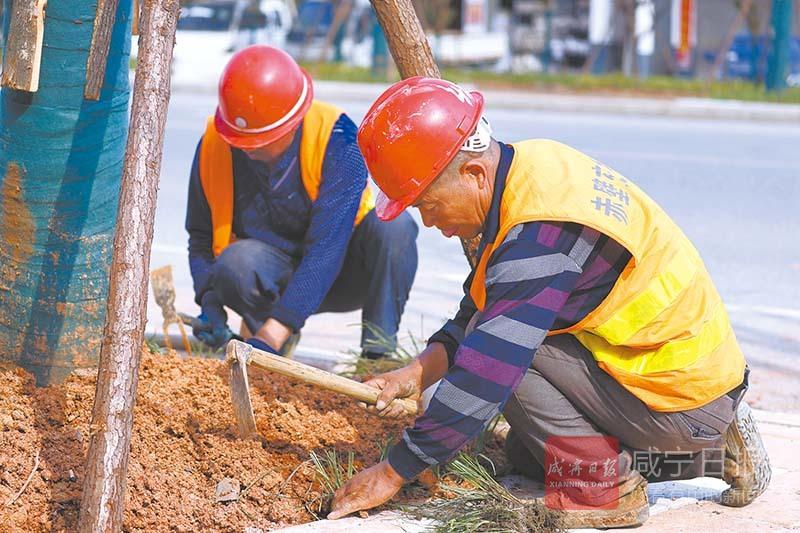 图文:咸安汀泗桥镇道路绿化正当时
